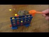 Прикольные дрессированные домашние мышки.